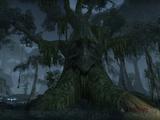 Brackenleaf's Briars (Faction)