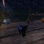 Детёныш чёрной сенч-пантеры1