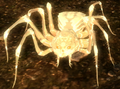 Albino spider.png