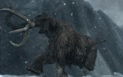 Вмерзший во льду мамонт