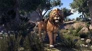 Pride-King Lion