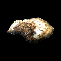Шляпка чешуйчатого трутовика