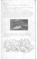DUG Page 55.png