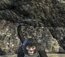 Qawi (Monkey)