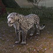 Снежный сенч-леопард