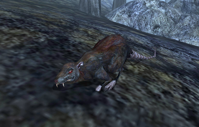 File:Rat (Morrowind).png