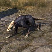 Воронья даэдракрыса