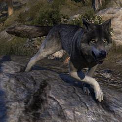 ESO Dire Wolf