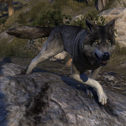 File:ESO Dire Wolf.png