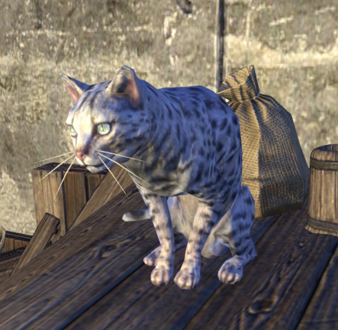 File:Captain Crustywhiskers.png