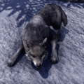 ESO Wolf.png