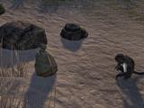 Выброшенный на берег