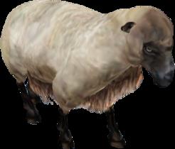 Oblivion Sheep