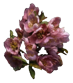 Timsa-Come-By Flowers Tribunal Ingredient.png