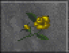 Yellow Rose (Daggerfall)