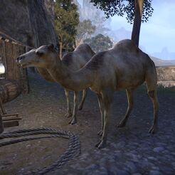 Верблюд (Online)