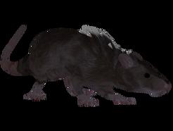 Крыса (Oblivion) 0