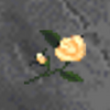 White Rose (Daggerfall)