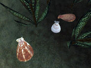 Моллюски-жемчужницы (Morrowind) 01