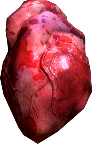 human heart (skyrim) | elder scrolls | fandom powered by wikia, Human Body