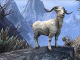 Ninendava Sacred Goat
