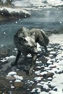 Snow Fox card art
