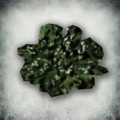 Зелёный лишайник