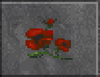 Red Poppy (Daggerfall)