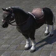 White Mane Horse Игреневая лошадь