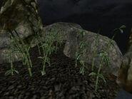 Прибрежная флора (TES III) 03