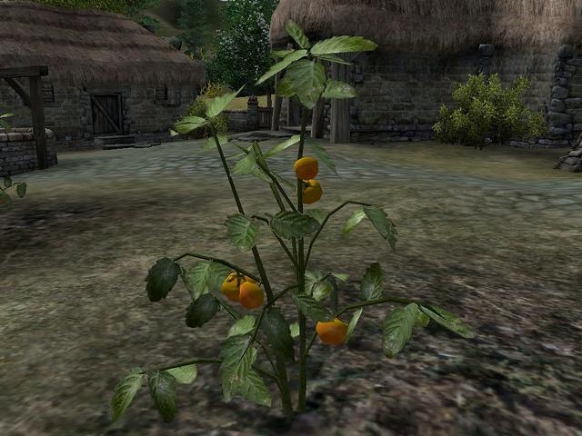 File:Tomato (Oblivion).png
