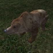 Чумной медведь (TESIIIB)