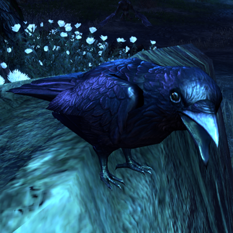 File:ESO Knave of Rooks.png