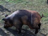 Pig (Online)