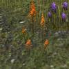 Mountainflower