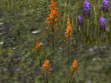 Mountain Flower (Online)