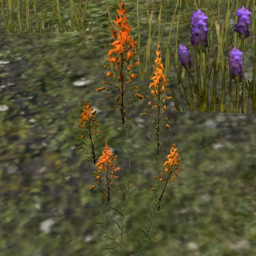 Mountain flower online elder scrolls fandom powered by wikia mountain flower mightylinksfo