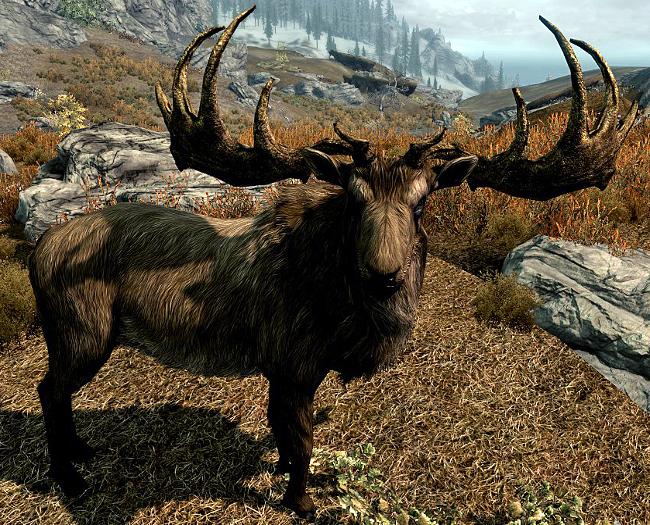 Elk (Skyrim) | Elder Scrolls | FANDOM powered by Wikia