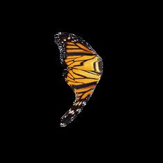 Крыло монарха