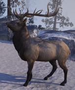 Elk (Online)