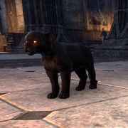Детёныш чёрной сенч-пантеры