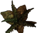 Treated Bittergreen Petals