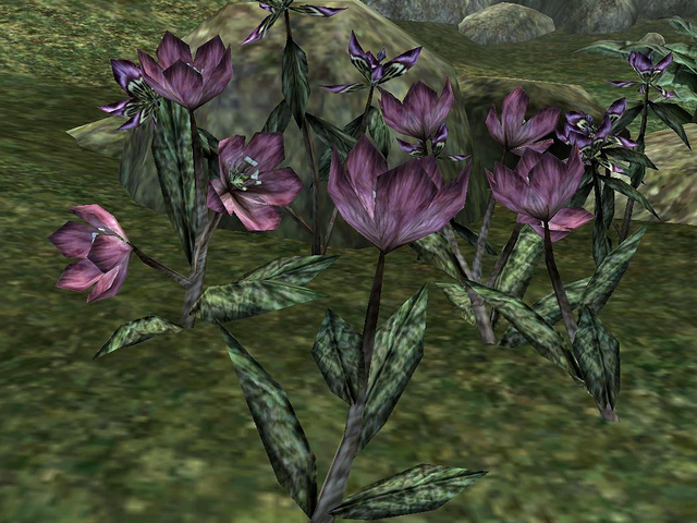 File:Willow Flower.png