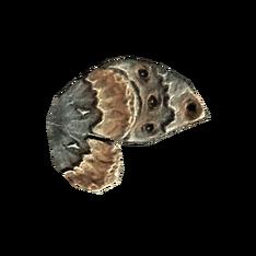 Крыло мотылька предка