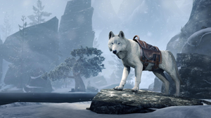 Crown Store Ice Wolf