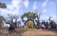 Vinedusk Village Burned trees