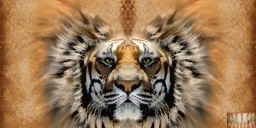 File:Khajiit texture 6.png