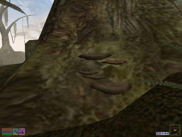 File:Mushrooms.jpg