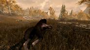 Werewolf - Full Sprint (Skyrim)