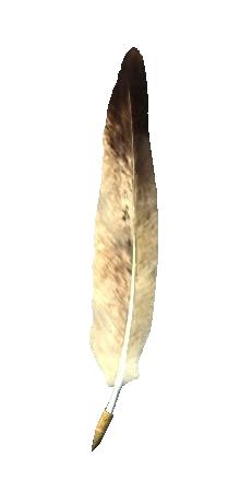 Двойственное перо